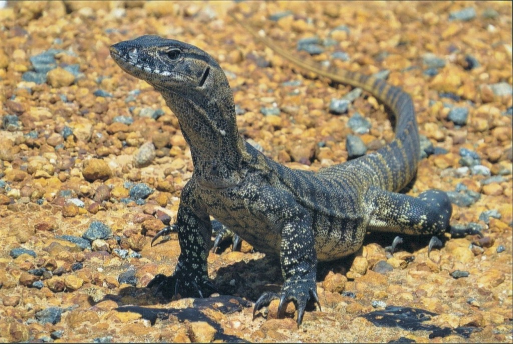South West Reptiles
