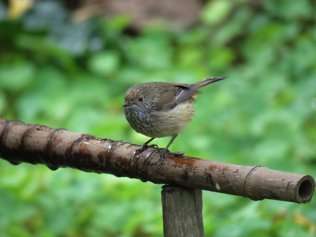 Bird perched at birdbath