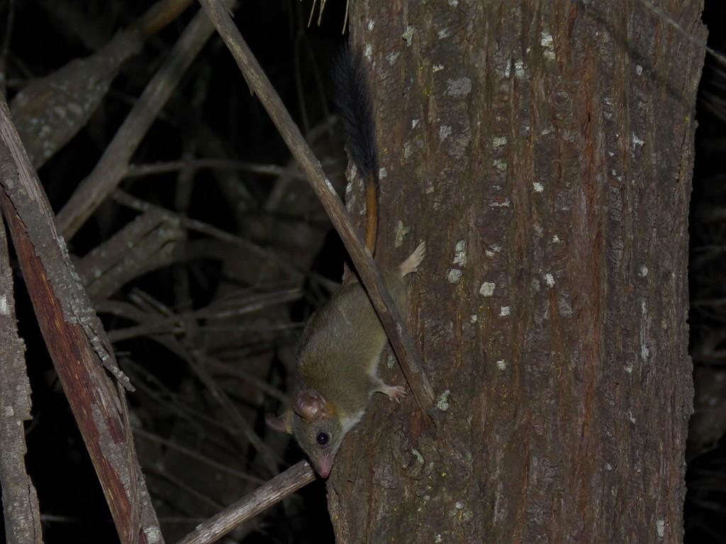 Dryandra Woodland