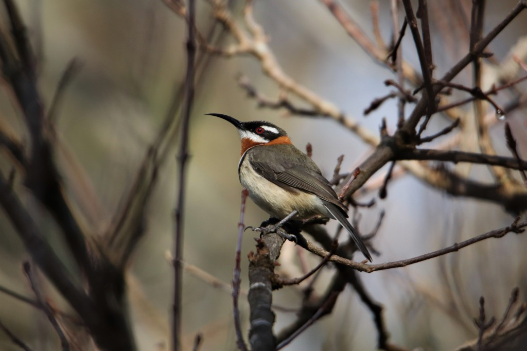 Margaret River Birds - Wildlife