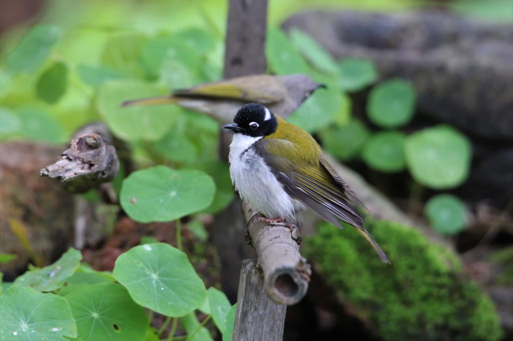 Wildlife - Birds - Margaret River