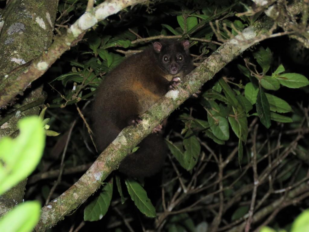 Queensland Wildlife