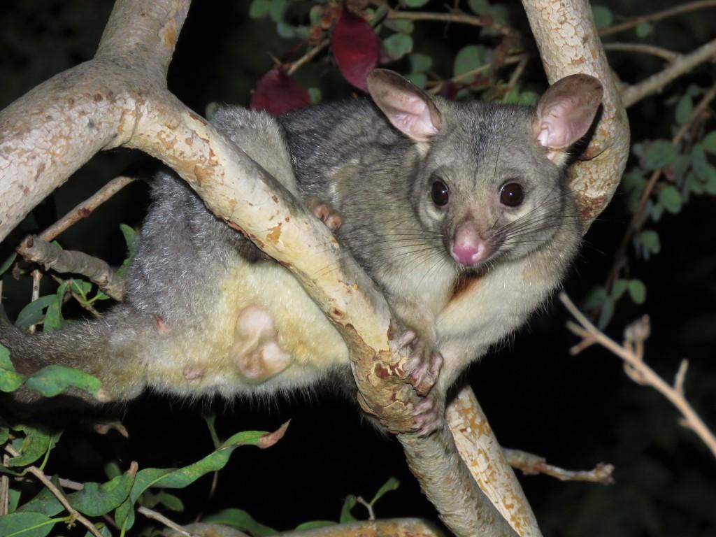 Kimberley Wildlife
