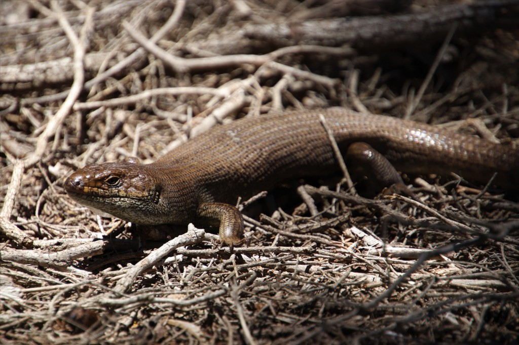 Rottnest Island Wildlife